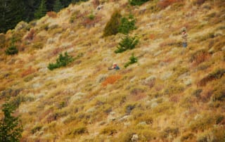 hunter hiding in the grass on a hill