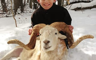 boy posing with a ram